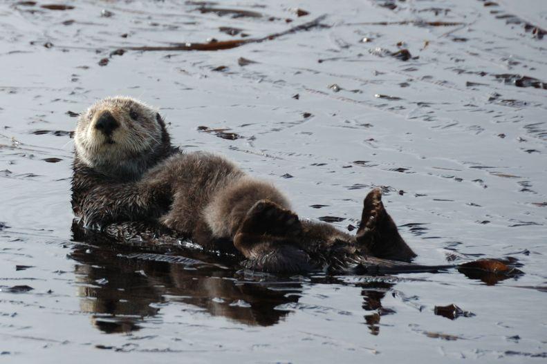 Olympic Coast National Marine Sanctuary