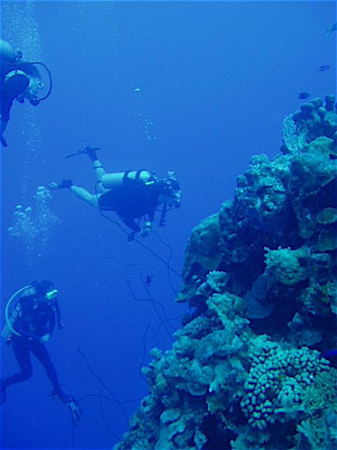 the best dive sites in bonaire