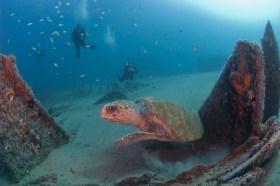 Monitor National Marine Sanctuary