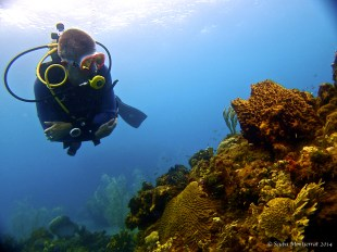 The eruption of Soufriere Hills has meant 20 years of minimal human interference underwater, which has led to unspoiled reefs filled with reef fish and other marine life.