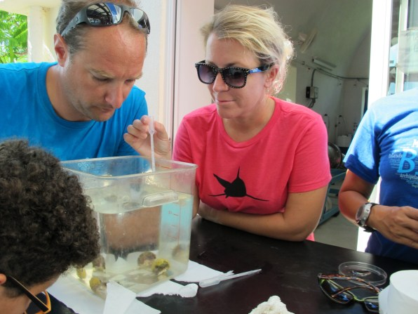Collecting larvae from 'Brooder' Corals