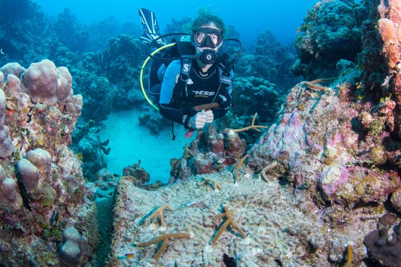 Cayman dive operations will be seeding local reefs from their coral nurseries
