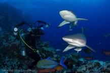 Shark dive at North Horn