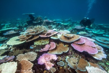 Corals come in every shade of the rainbow at Trolley Shoals