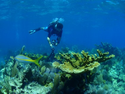 A specially-trained diver takes photos that will ultimately be stitched into a 360-degree image of Florida Keys National Marine Sanctuary. Collecting these images with the use of a tripod requires a sanctuary permit and extreme care to not disturb the reef or seabed. (Photo credit: Emma Hickerson/NOAA)