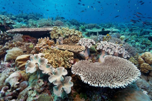 The shallows at Wakatobi are accessible to divers and kids who may be snorkeling (Photo by Norbert Probst)