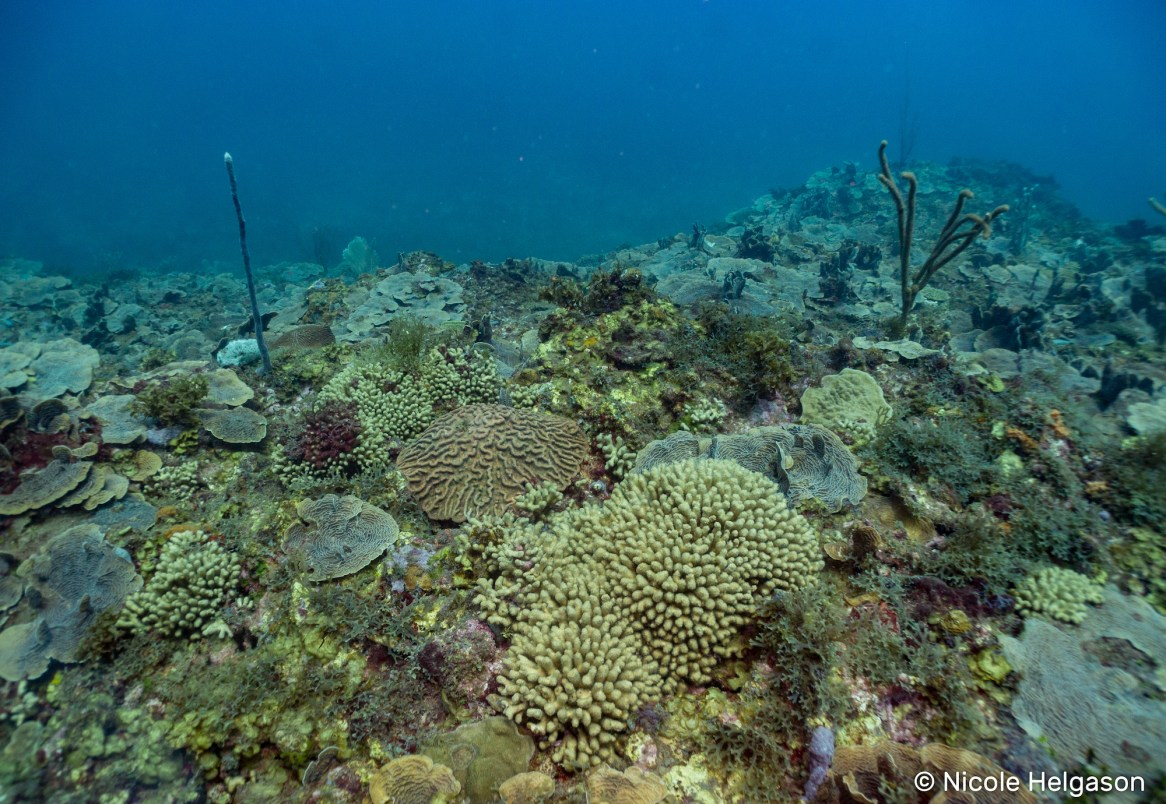 We were lucky enough to have a reef names after us! Nikki's Reef was one of the nicest reefs we found in Tela.