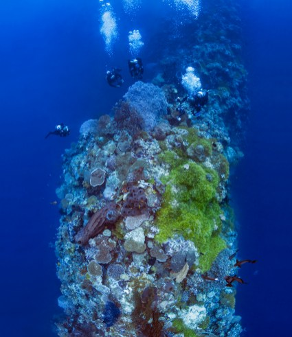 Blade is one of Wakatobi's most popular, signature dive sites. Each subsequent seamount creates a dive profile that looks much like a serrated knife. (Photo credits: Walt Stearns)