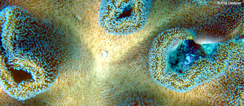 Reef-based tourism accounts for more than 15% of gross domestic product (GDP) in at least 23 countries and territories. (Burke et al., 2011). (Photo credit: Anita Gardener)