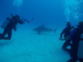 Photographing bull sharks in Mexico with SharkSchool (Photo Credit: Olaf Holzmann)