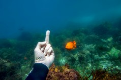 Flipping off a Garibaldi in Catalina