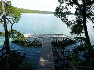 After walking in the woods, you'll arrive at this pier, the entry point for the Kakaban jellyfish lake.