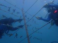 Reef Restoration Foundation - coral tree 1