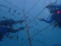 Reef Restoration Foundation - coral tree 1