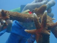 Reef Restoration Foundation toothbrush cleaners