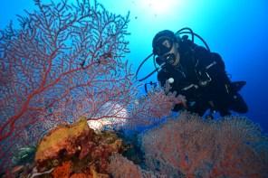 Munda sea fans and diver image credit Mike Scotland