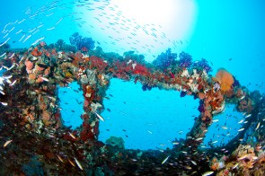 The wreck's super structure is easily identifiable under layers of thriving coral and swarms of baitfish (Photo: Nadia Aly)