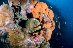 Moray eels are common on the wreck and peep out of coral structures to say hello (Photo: Nadia Aly)