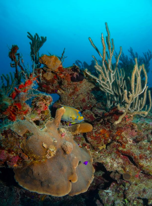 Aquarium dive site offers lots of fish and colorful coral (photo by Lia McLain)