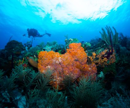 Aquarium dive site offers picture-perfect wide-angle shots (photo by Lia McClain)