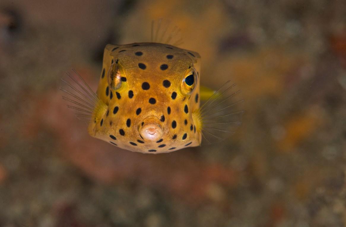 best shore dives in Sydney