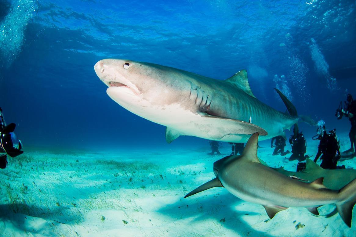 safely photograph sharks