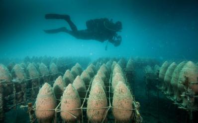 underwater winery