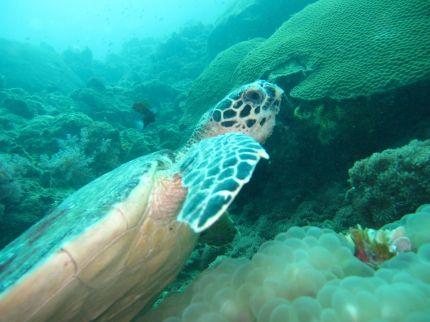 krabi turtle