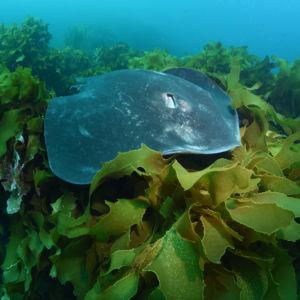 Scuba diving Poor Knights Islands