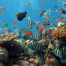 dive_sites_plonco_reef