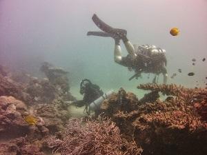 New Zealand Sea Adventures, Wellington Diving Adventures