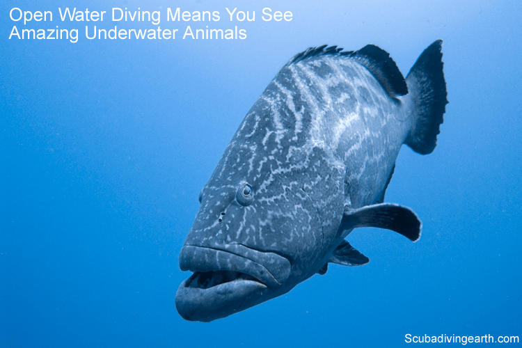 What Are The Types Of Scuba Diving How To Enjoy Scuba