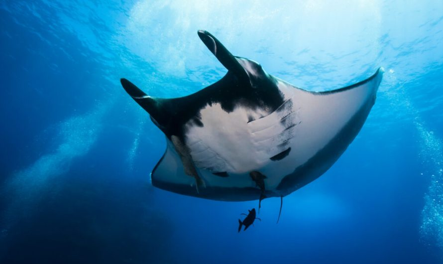 5 Amazing Dive Destinations Where You Need an Advanced Open Water Certification