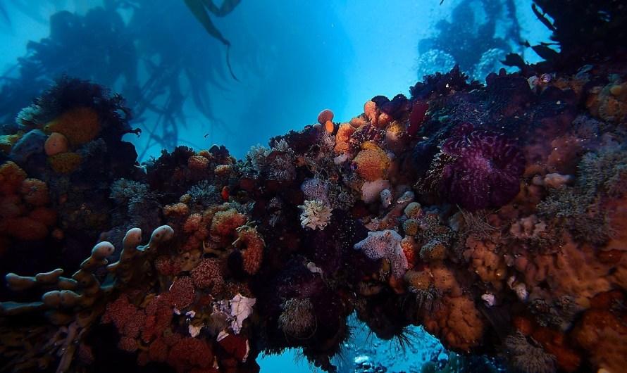 New Zealand's Best Shore Dives