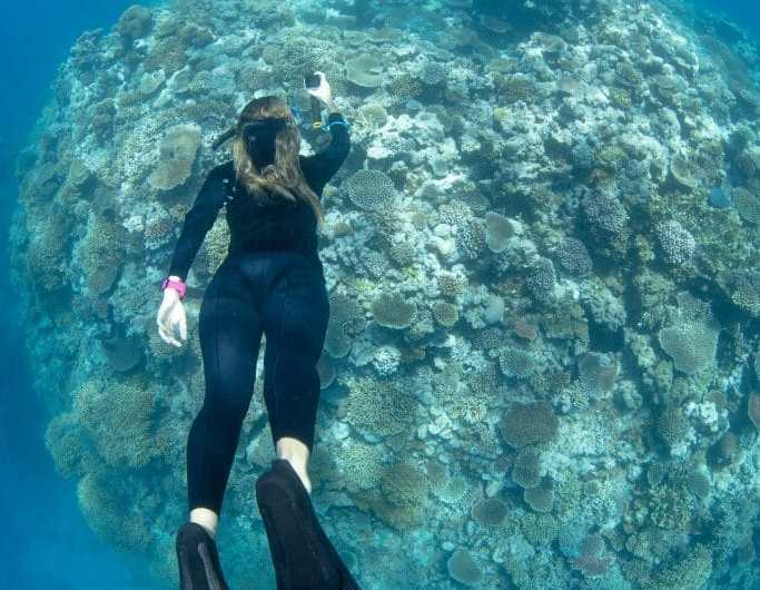 World's largest dive community joins forces to protect the Great Barrier Reef