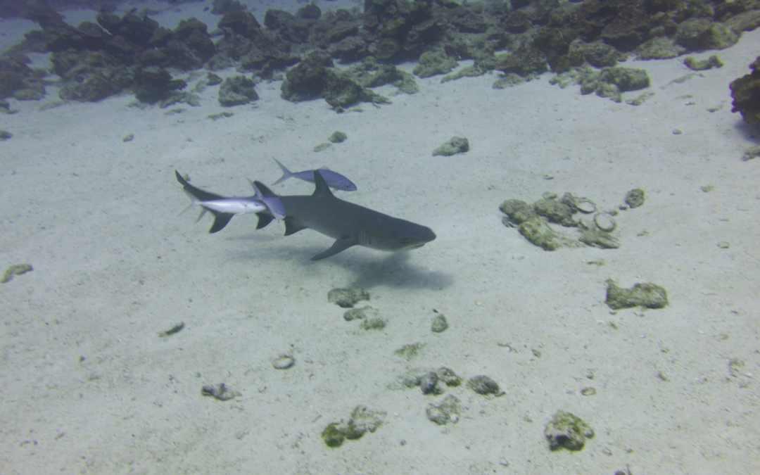 Cocos Island Internship