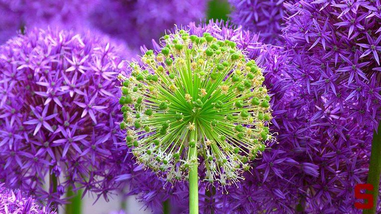 I migliori siti per regalare e recapitare fiori in tutto il mondo