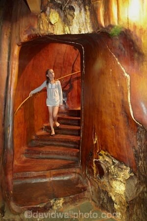 ancient kauri wood_staircase 2
