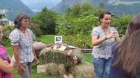 La filiera della lana di Alpaca - Caspoggio