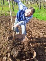 Zafferano Saraceno - lavorazione terreno