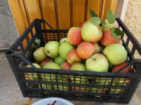 mercato agricolo diffuso di Mola di Bari - mele naturali