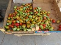 mercato agricolo diffuso di Mola di Bari - pomodori verdi
