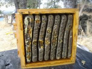 honey-box-september-2008