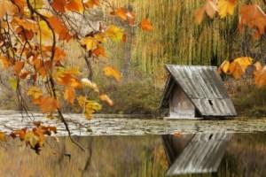Foliage, l'estate indiana: viaggi, libri e idee