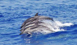 delfini liguria