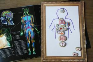 Gioco per conoscere il corpo umano e gli organi interni