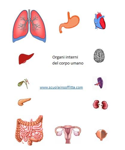 organi interni da stampare