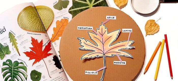 Attività sulle foglie