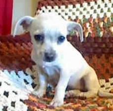 animalcontrol_dog