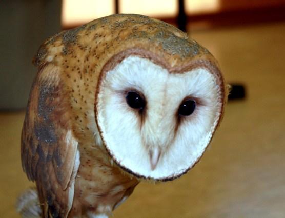 owl020413a